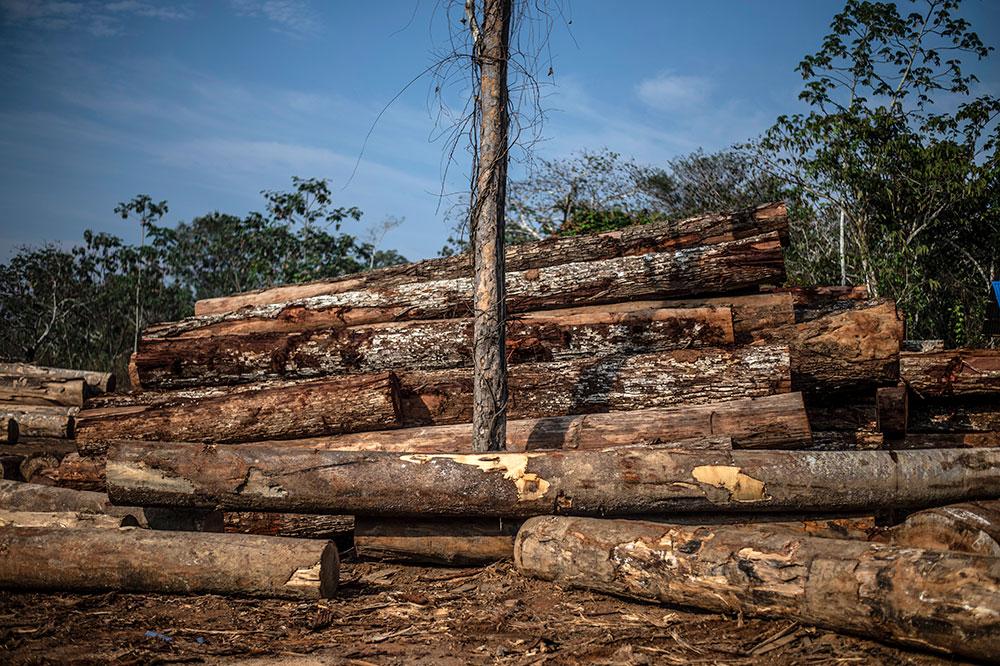 Brésil: des multinationales américaines complices de la déforestation, selon Greenpeace