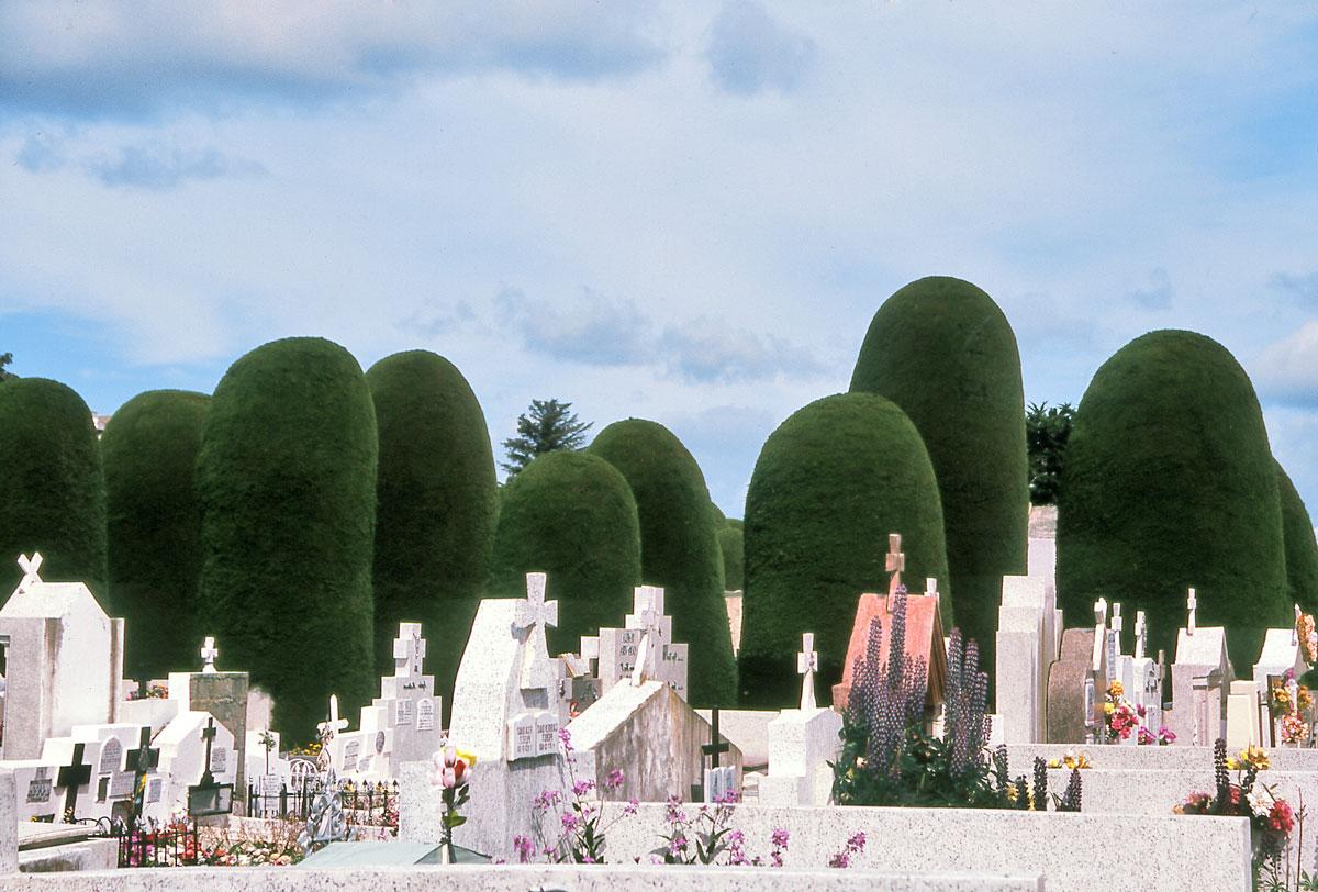 Le cimetière, avec ses tombes au premier plan et, en toile de fond, les fantomatiques silhouettes des cyprès.