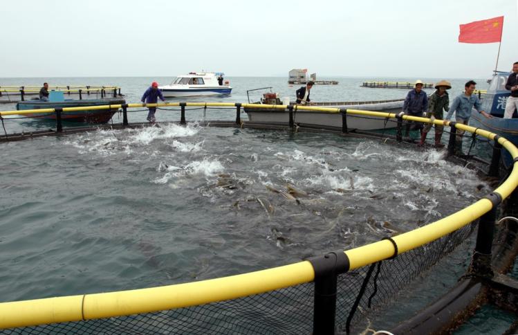 Le Pays autorise l'importation de poissons d'aquaculture