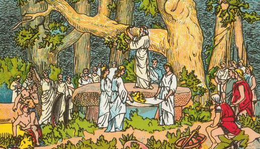 Le gui, une plante à laquelle les Celtes conféraient des vertus magiques.