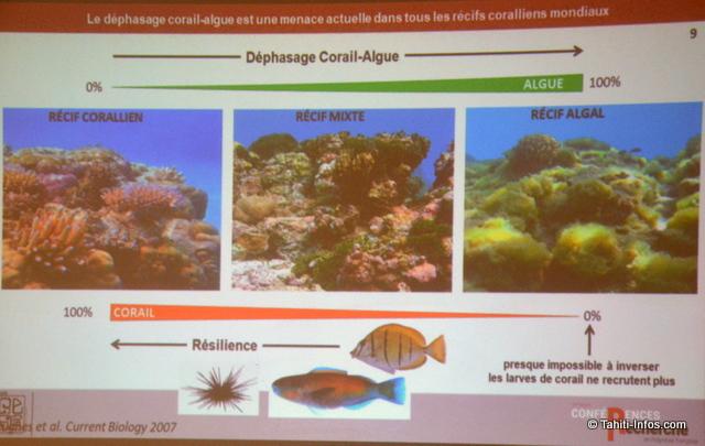Les travaux du Criobe de Moorea montrent que quand les poissons herbivores disparaissent, les récifs coralliens qui meurent deviennent des récifs algaux au lieu de se régénérer.