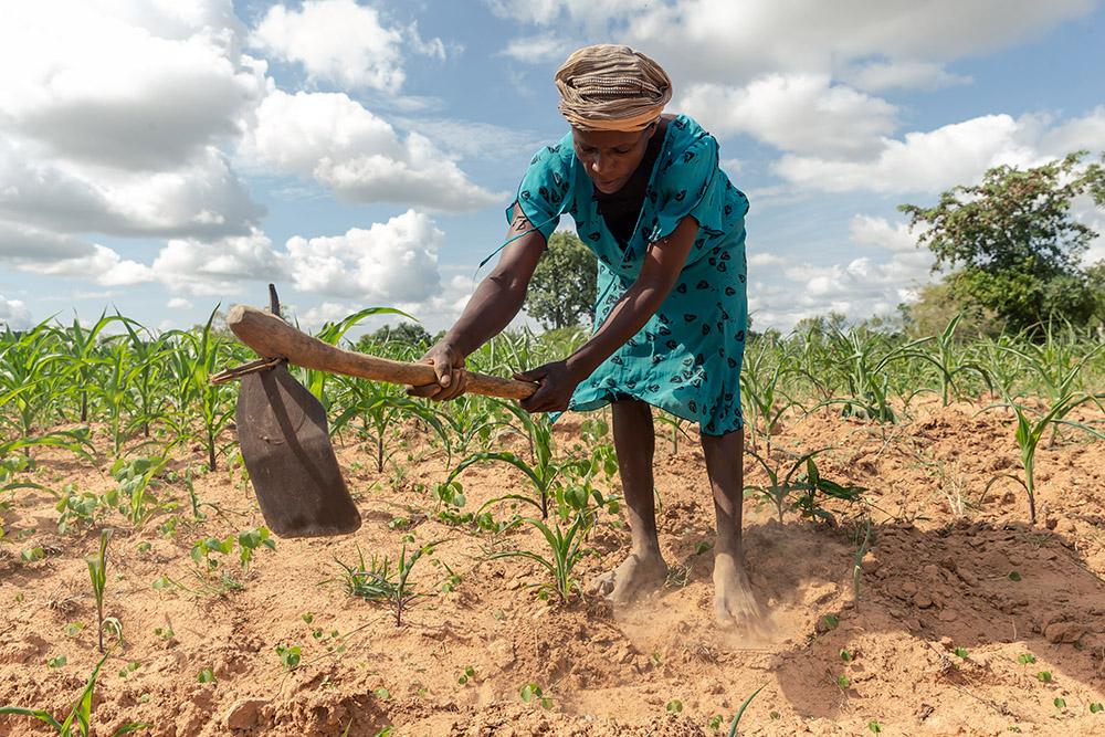 En Afrique australe touchée de plein fouet par la crise climatique, des hommes et des bêtes aux abois