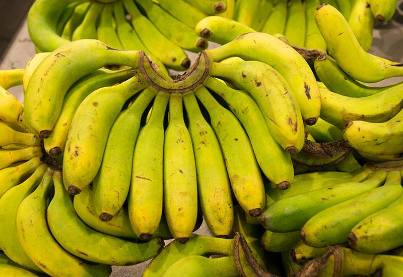 Une nouvelle variété de banane, bio, fait son apparition aux Antilles