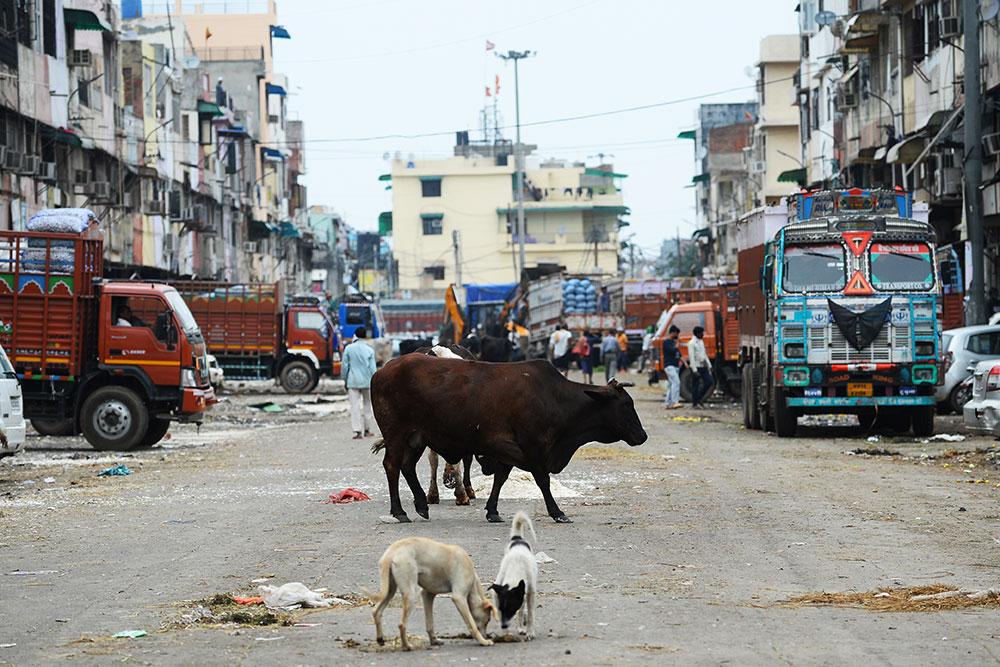 Dans l'Inde confinée, les animaux s'approprient les rues