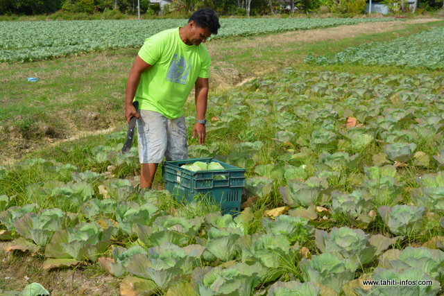 Les déplacements autorisés pour les agriculteurs et les éleveurs