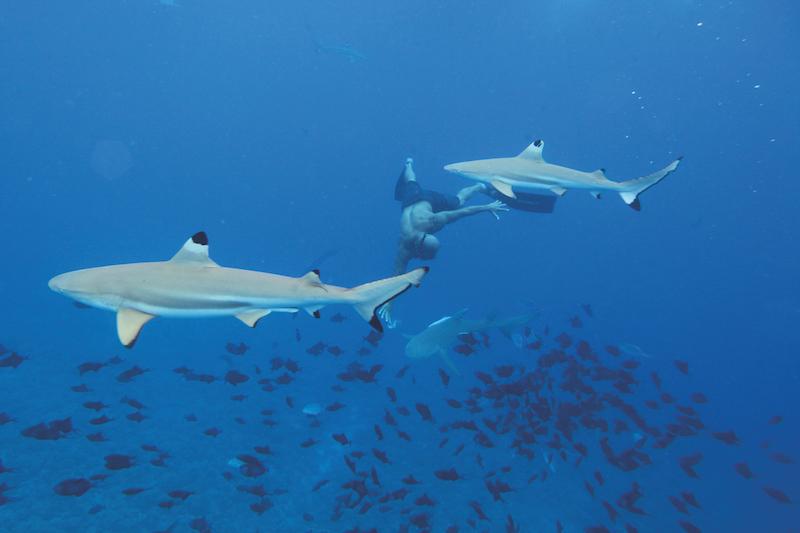 Shark feeding à la Vallée blanche ? Enquêtes du Pays