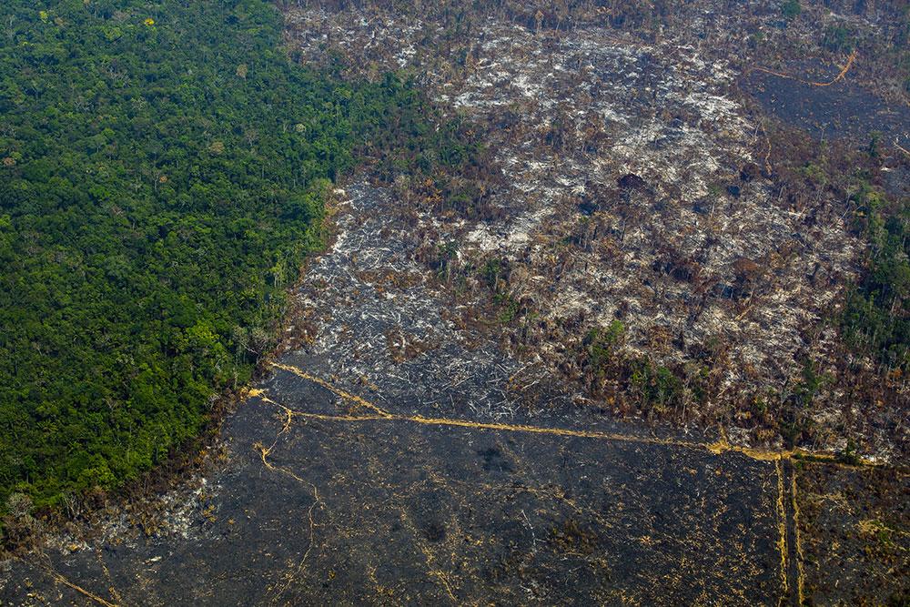 Un terrain de foot de forêt primaire détruit toutes les six secondes, selon une étude