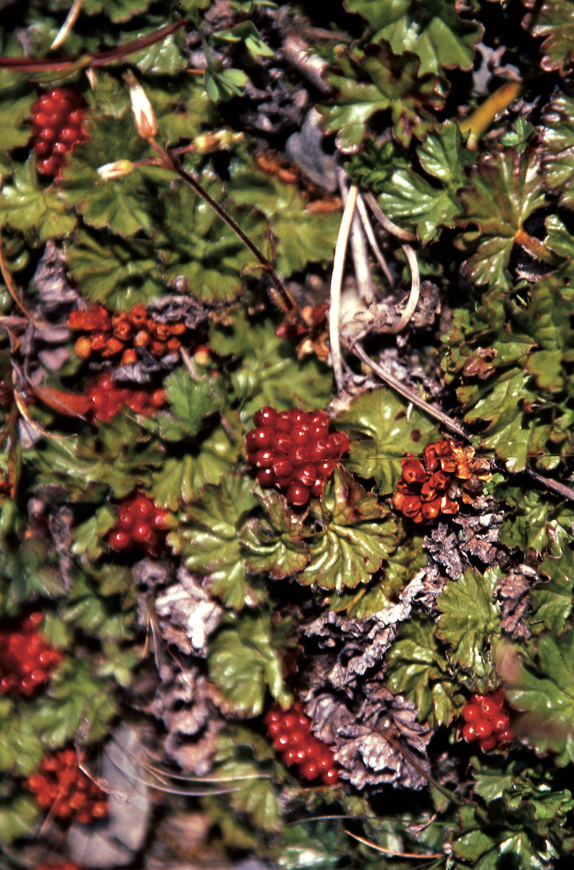 Délices sauvages d'Ushuaia