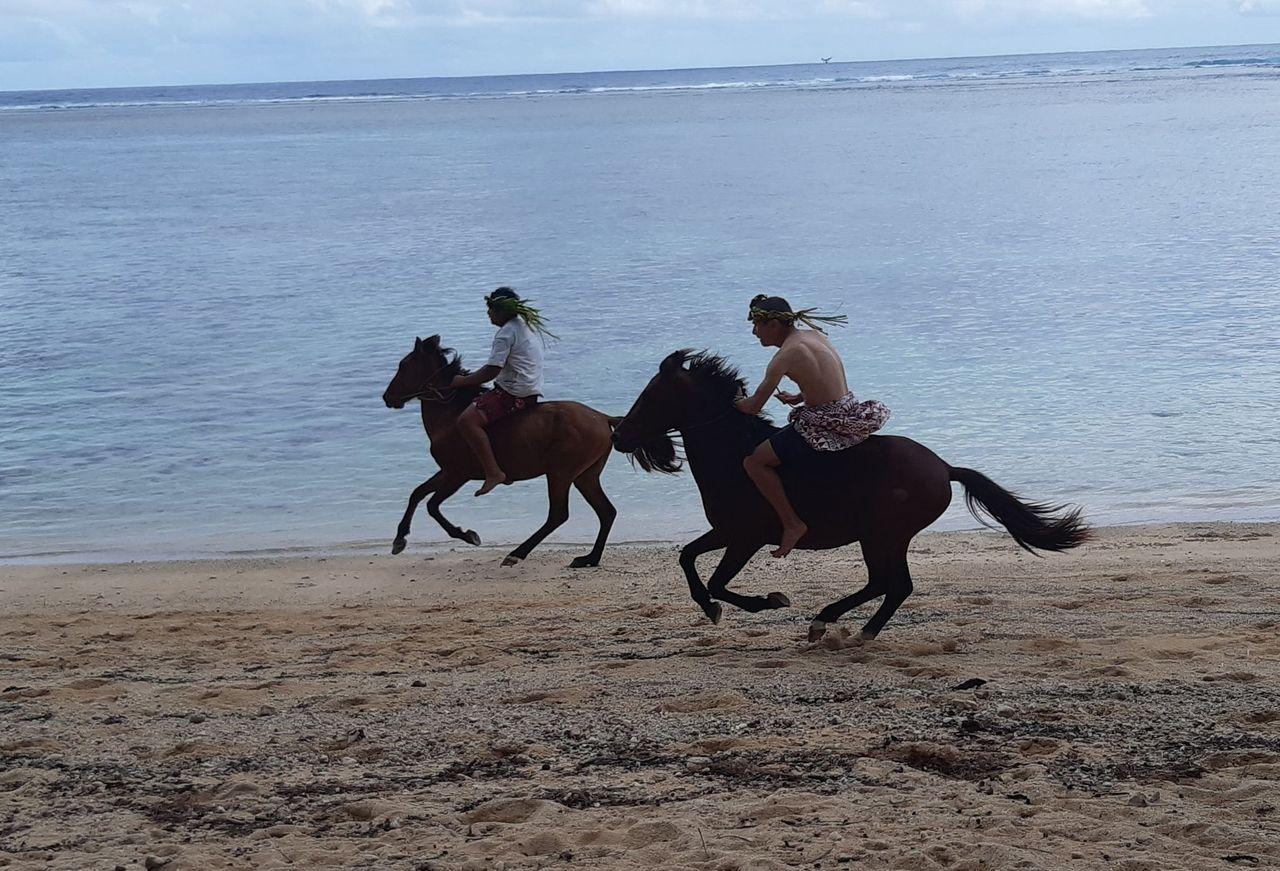 Des chevaux en guise de Heiva