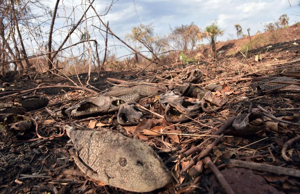 Brésil: trois fois plus d'incendies cette année au Pantanal