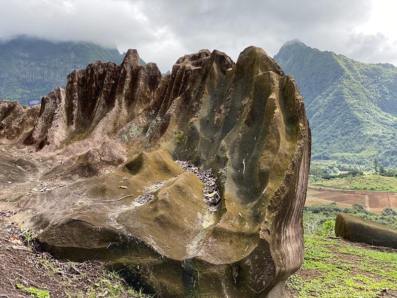 L'île Sacrée se pare de vert