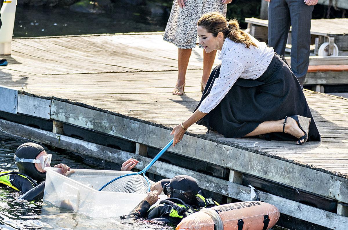 Au Danemark, deux fois plus de mers en manque d'oxygène qu'il y a un an