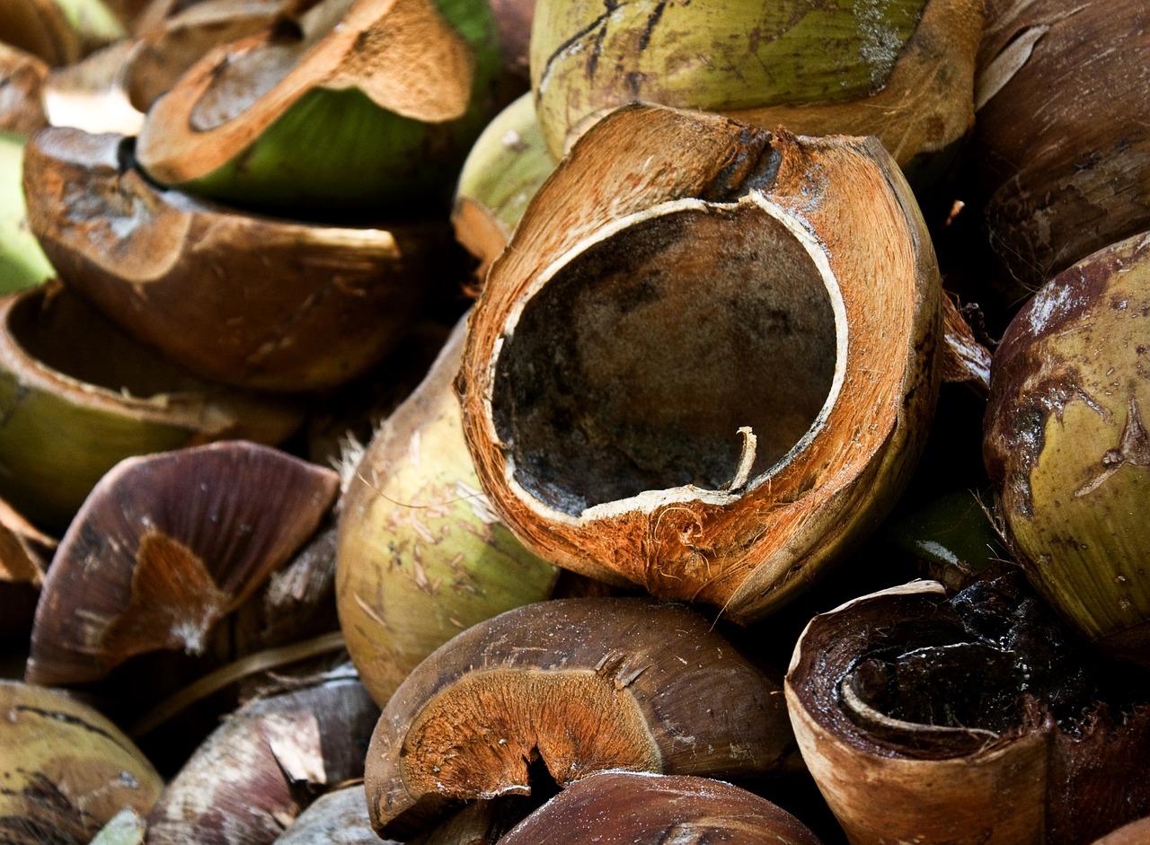 Cocorig : la fibre de coco pour sortir du lagon des kilomètres de plastique