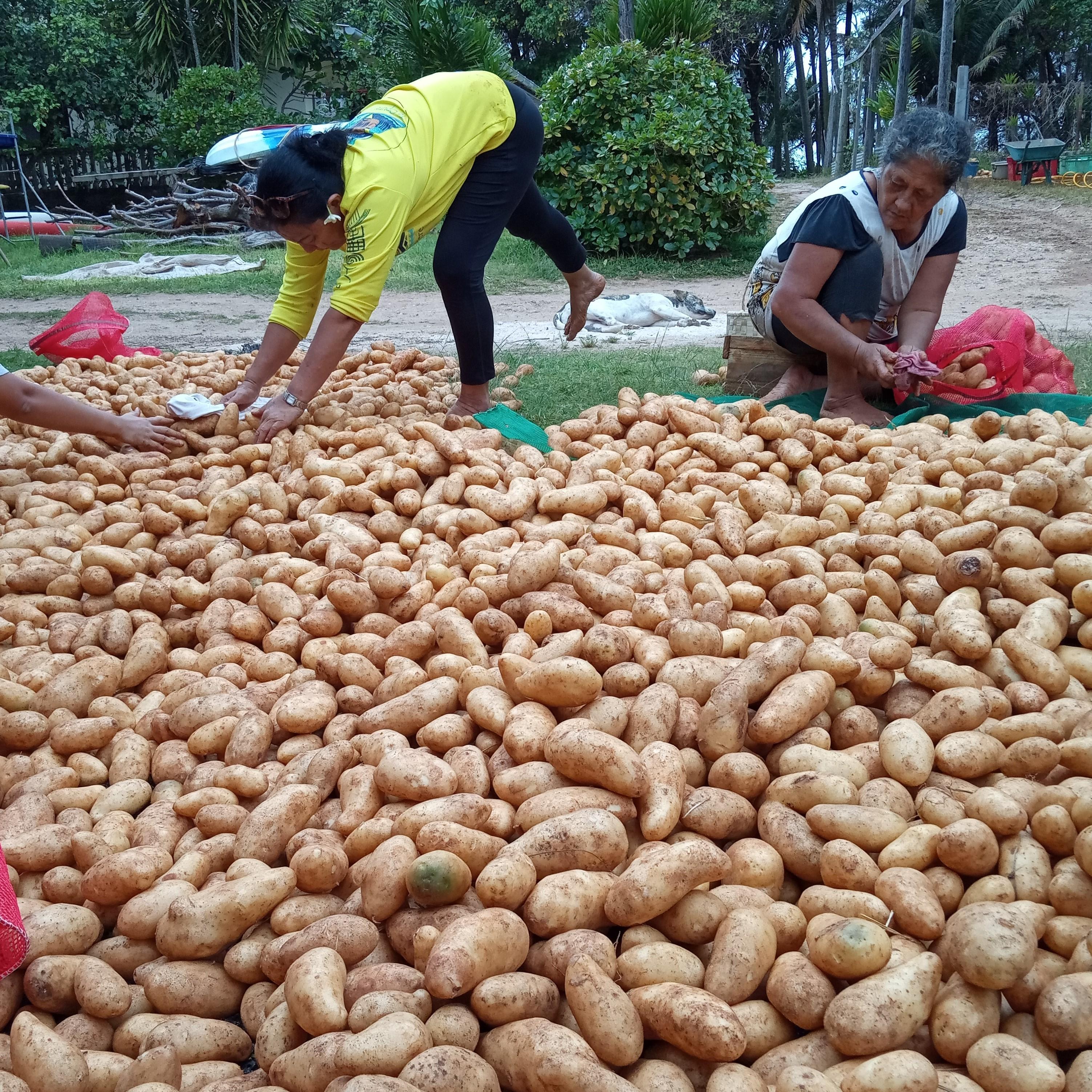 Les Australes gardent la patate