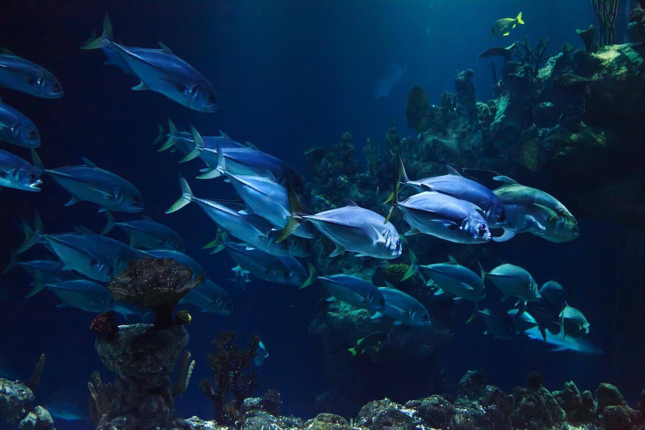 La pollution sonore fragilise la santé des poissons (étude)