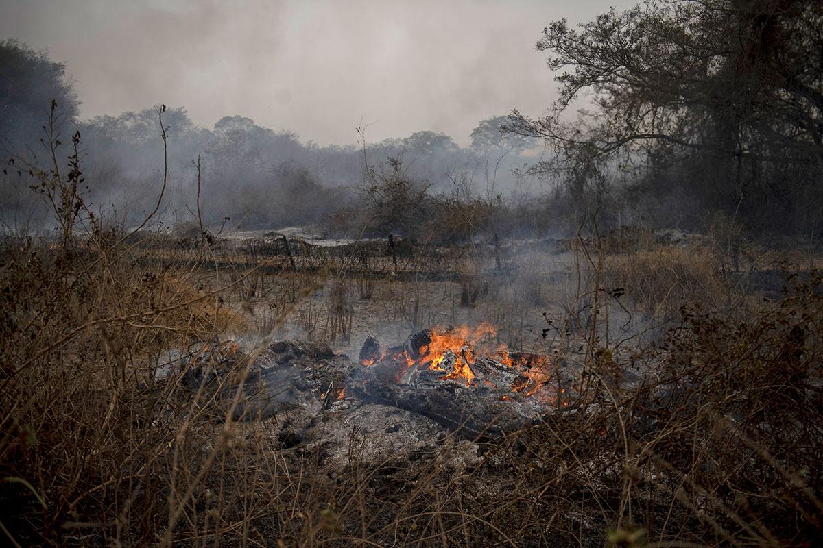 Brésil: l'Amazonie et le Pantanal en flammes, Bolsonaro sous pression