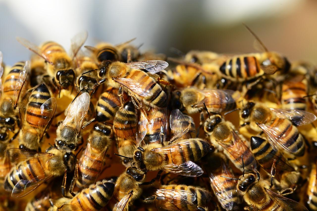 A l'Assemblée nationale, le retour controversé d'insecticides tueurs d'abeilles