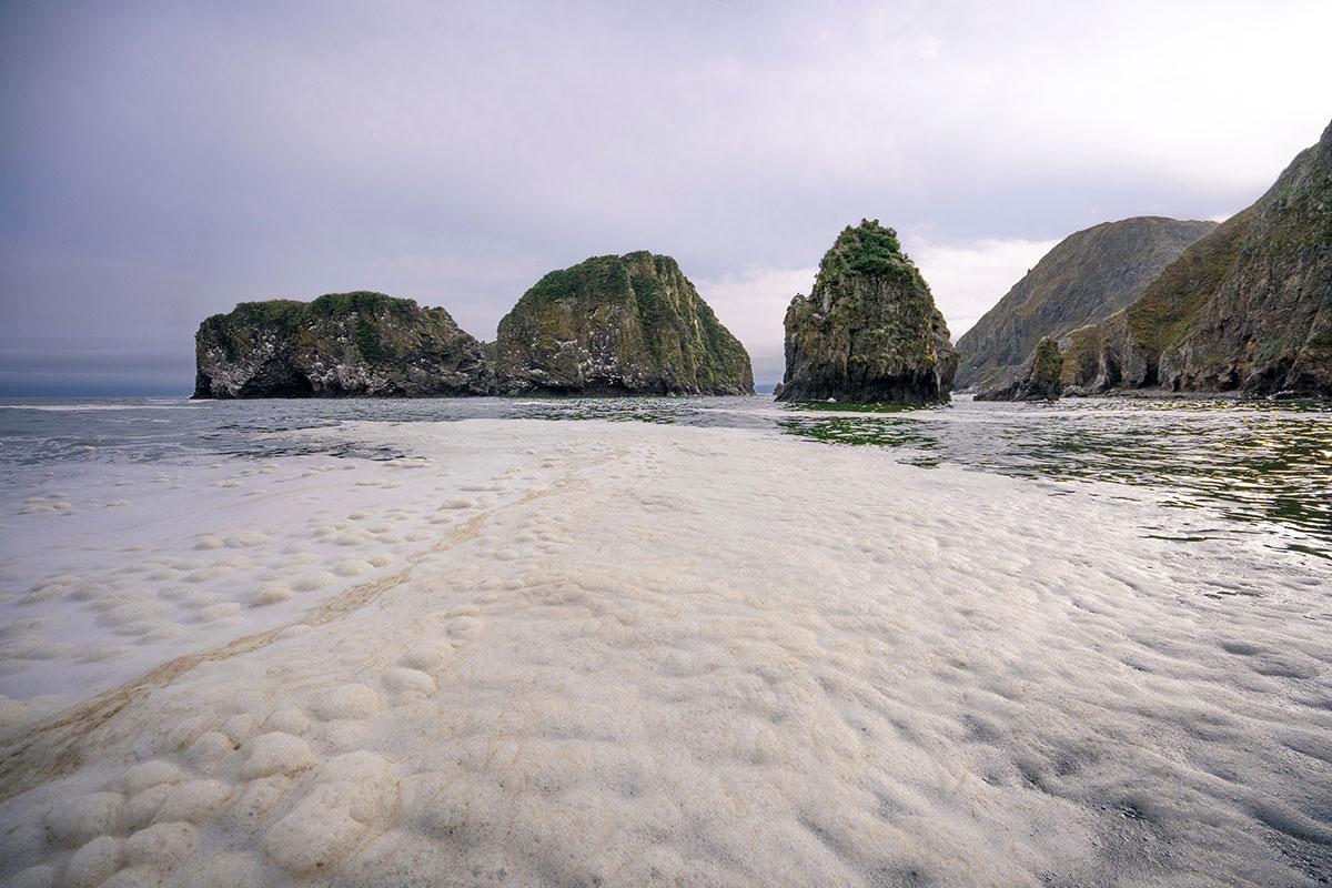 Kamtchatka: les animaux marins ont été tués par des micro-algues