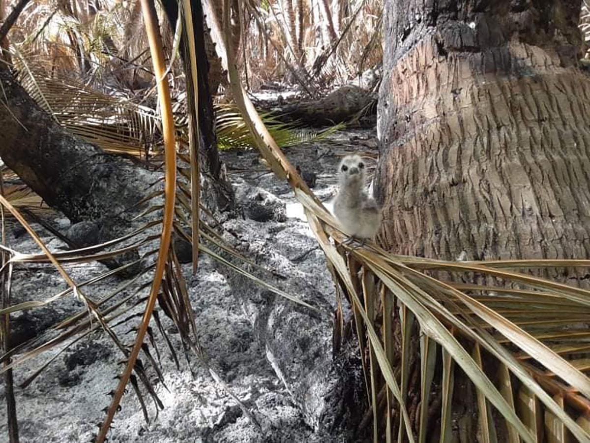 Un incendie a ravagé dimanche une partie du motu Taeo'o, refuge de centaines d'animaux. Des arbres, des kaveu et des nids d'oiseaux ont été brulés.