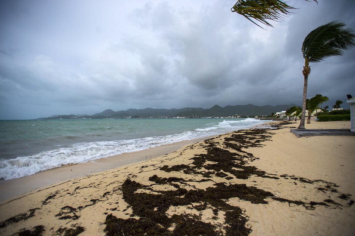 Une femme tuée par un requin sur l'île de Saint-Martin