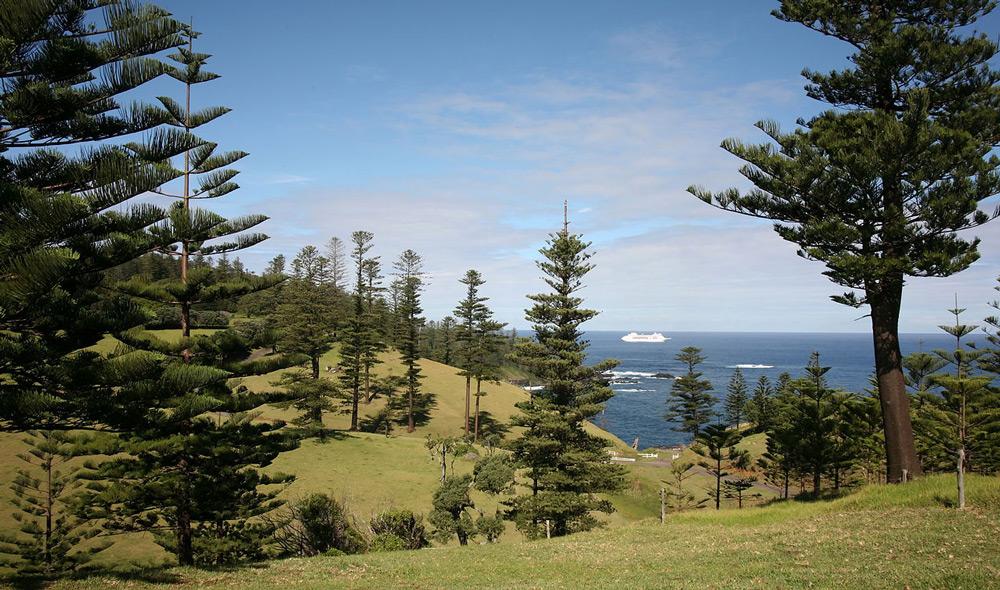 Espèce aujourd'hui protégée, le pin de Norfolk a été disséminé dans le monde entier pour orner parcs et jardins (photo Berknot).