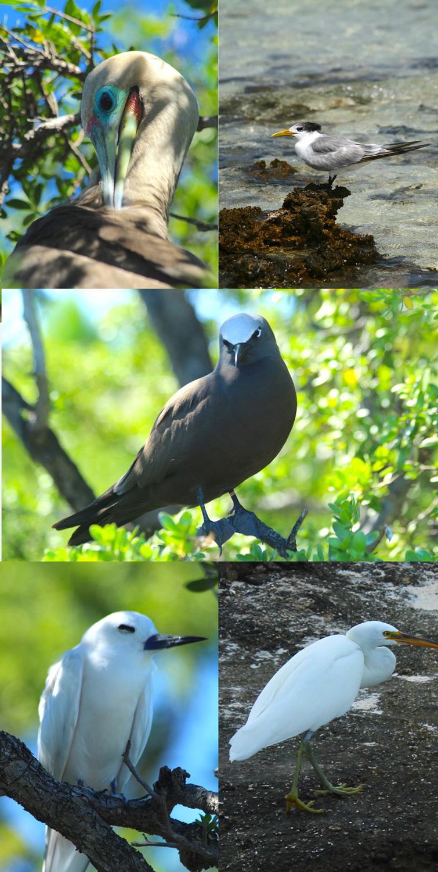 Tikehau, la renaissance de l'île aux oiseaux