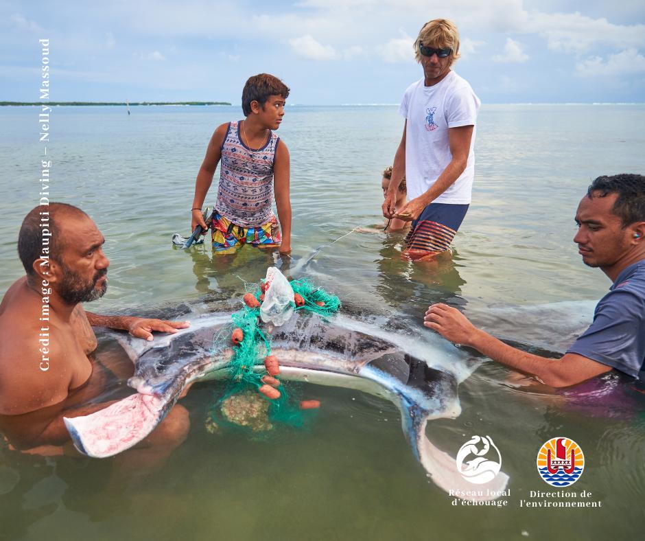 Le matériel de pêche perdu ou abandonné fait régulièrement des victimes inutiles dans les eaux du fenua.
