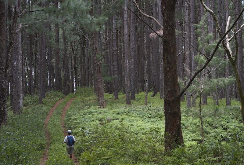 La filière bois en bonne voie à Rurutu