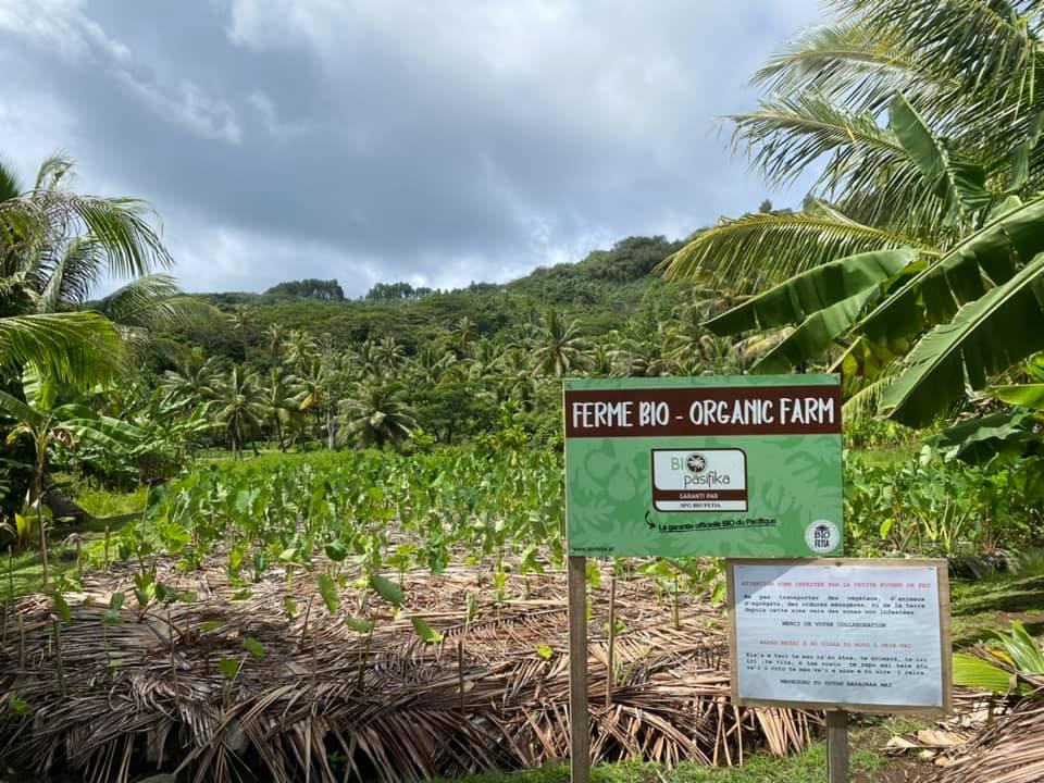 Agriculture biologique : une subvention de 18 millions pour Bio Fetia
