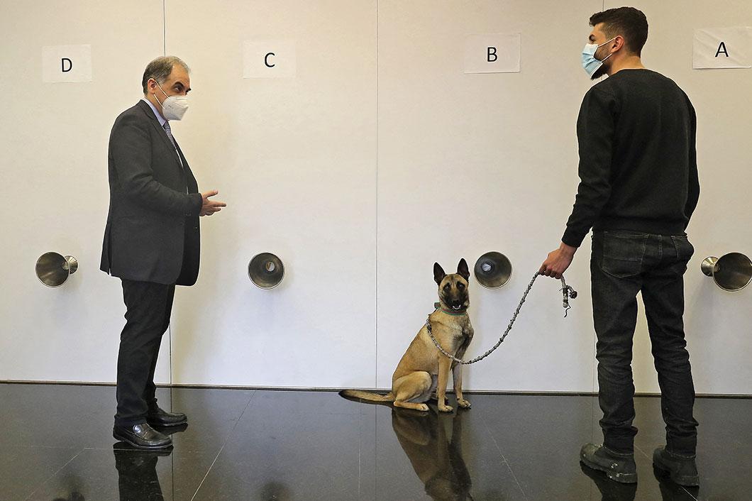 Un médecin libanais mise sur le flair des chiens pour freiner le coronavirus