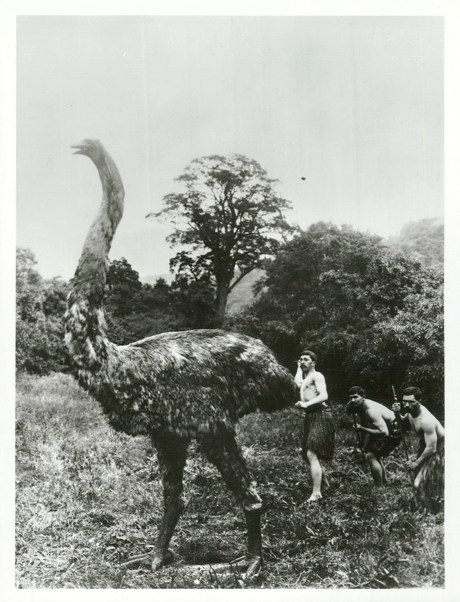Cette vieille photo, que l'on se rassure, n'est qu'un habile montage fait à partir d'un moa reconstitué et de faux chasseurs maoris.