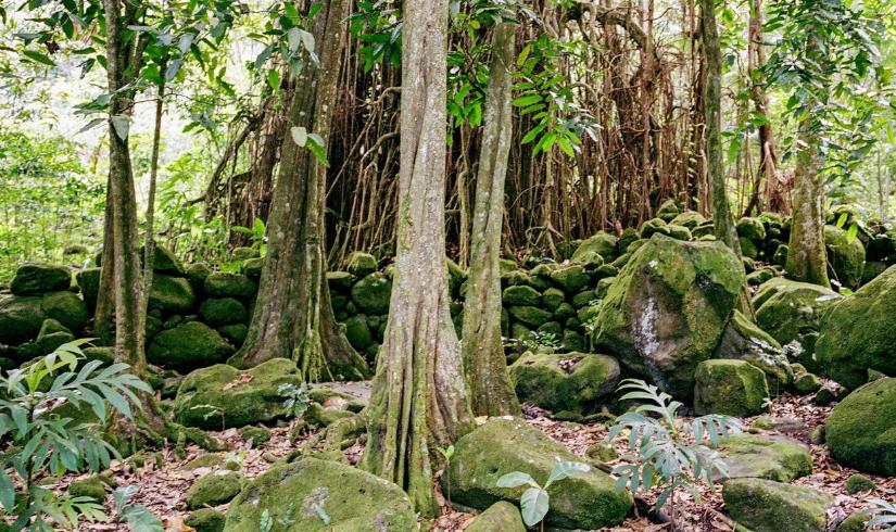 Les arbres, émanations des dieux marquisiens…