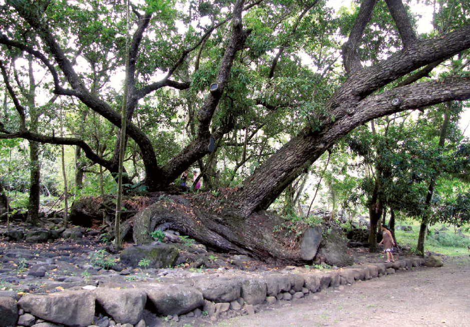 Pied de Temanu à l'entrée du village Aakapa à Nuku Hiva.