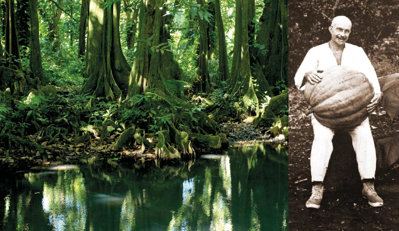 Harrison Smith posant avec une citrouille de belle taille ; à partir de 1919, et jusqu'à sa mort en 1947, cet Américain se consacra entièrement à l'introduction de nouvelles plantes tropicales à Tahiti (photo collection musée James Norman Hall).