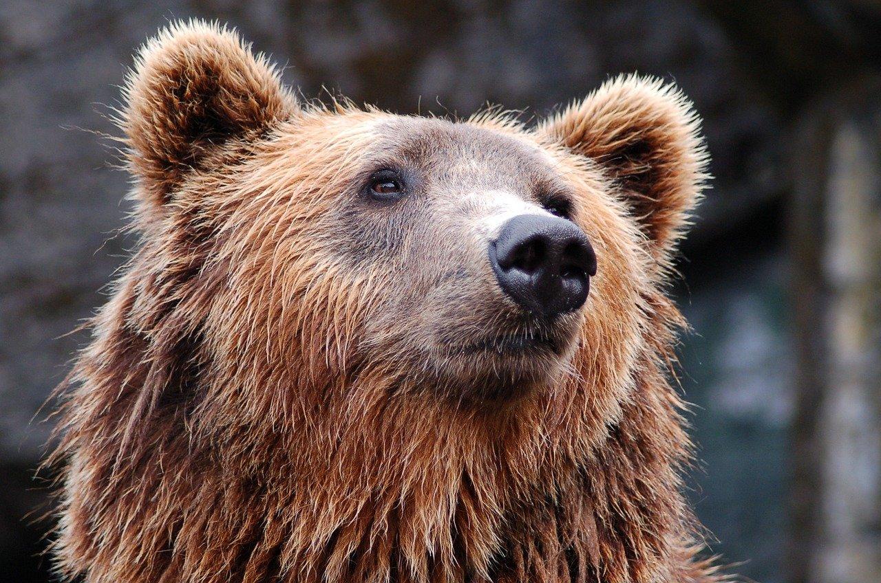 USA: une adolescente pousse une ourse à mains nues pour protéger ses chiens
