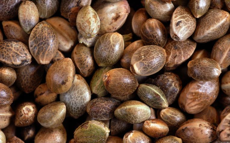 Relaxe pour importation de graines de paka
