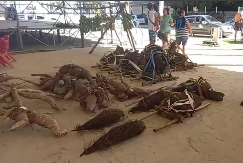 La traditionnelle pesée des tubercules faisait partie de l'exposition.