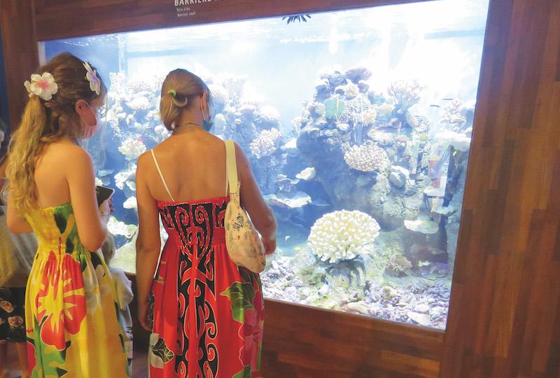 Des aquariums écotypiques présentent le récif, la crête récifale et le littoral.