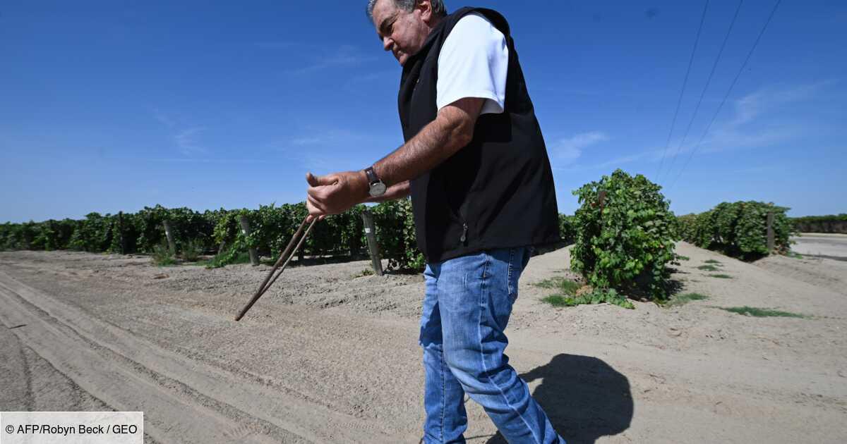 Dans les vergers desséchés de Californie, un sourcier à la recherche de l'or bleu