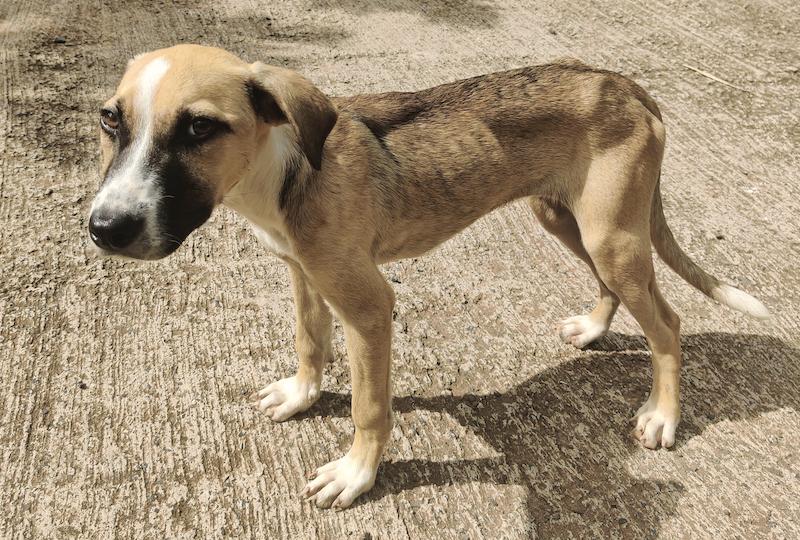Il est courant de voir des chiens errants, abandonnés aux Marquises, comme partout en Polynésie.