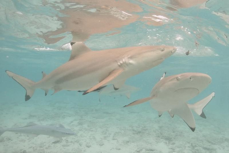 Sursis après la morsure d'un enfant par un requin à l'ex-Lagoonarium