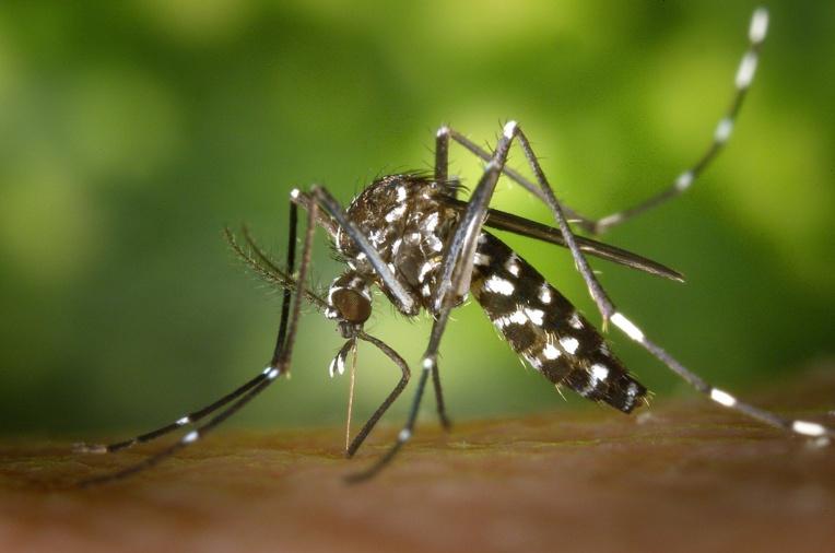 Vers un futur sans moustiques