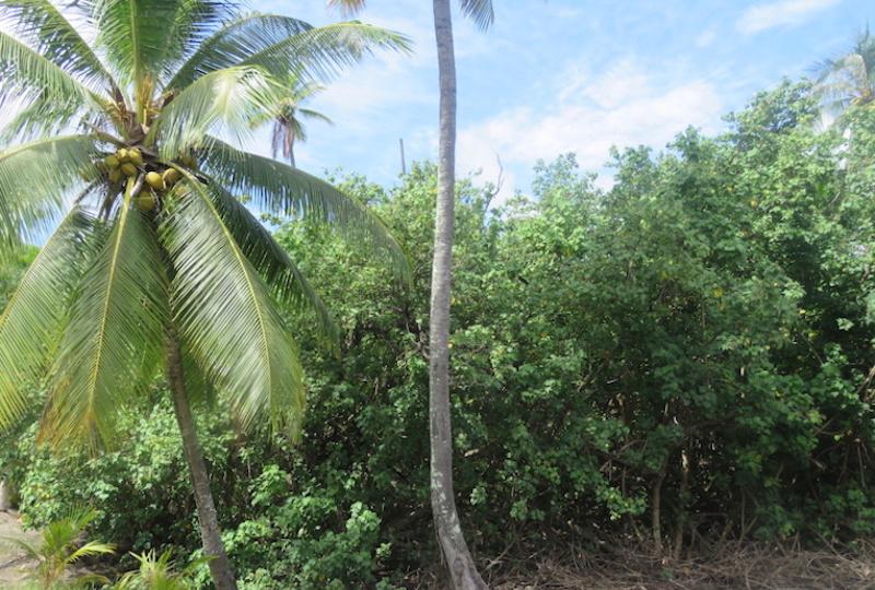 La rectification du PGA, a requalifié la terre Momona Tehiu 2 à Maharepa, actuellement en zone équipement, en zone économique en faveur de la société immobilière Sogil.
