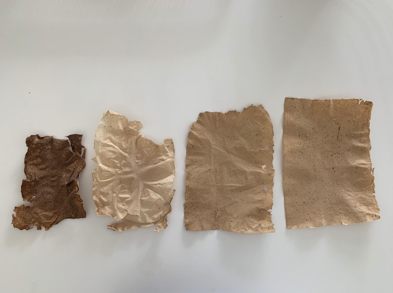 L'évolution de la pâte à sargasses. La version finale se rapproche de la feuille de papier classique.