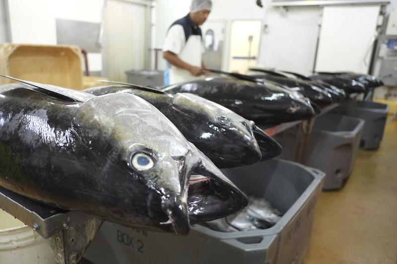 Le secteur de la pêche peine à émerger