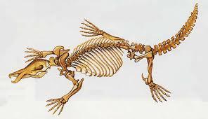 Le fossile d'un ornithorynque géant mis au jour en Australie