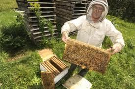 """Cri d'alarme d'apiculteurs pour stopper """"l'hémorragie des abeilles"""" et les méfaits des pesticides"""
