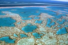 Du sperme congelé pour sauver la Grande Barrière de Corail