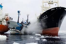 Départ des navires de Sea Shepherd à la poursuite des baleiniers japonais