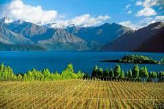 Récolte exceptionnelle pour les viticulteurs de Nouvelle-Zélande